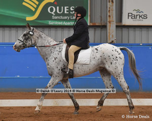 """Lachlan Anderson rode """"Spot"""" in the Team Trot Intermediate placing 6th with a score of 65.790%"""