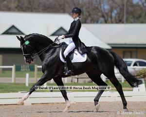 "Jessica Dertell rode the lovely stallion ""Zanzibar"" to win the FEI Prix St George Inter 1 Small tour"