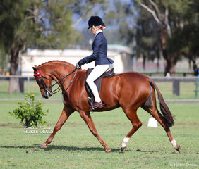"""Champion Large Pony of the Year went to Sharon Gillespie's """"Bayview Ivy League"""", ridden by Trinette Crawford."""