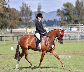 """Belinda Sibley's """"Time Square"""" was ridden by Trinette Crawford to win Champion Small Galloway of the Year."""
