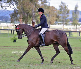 """Champion Large Galloway """"Royalwood On Broadway"""", ridden by Brett Peel for the Morelli Family."""