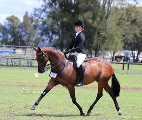 """Champion Small Hack was the Ellis & Firth nomination """"CP Renaissance"""", ridden by Sophia Redenbach."""