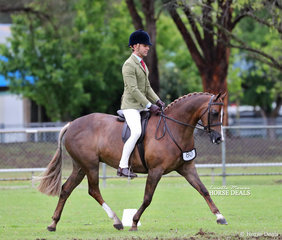 """Champion Newcomer Large Show Hunter Pony & Top 10 Open Large Show Hunter POny of the Year """"Langtree Secret Affair"""" exhibited by Michael Gates."""