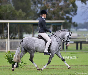 """Champion Large Show Hunter Pony of the Year """"Bamborough Banknote"""" and Tammin Glover."""