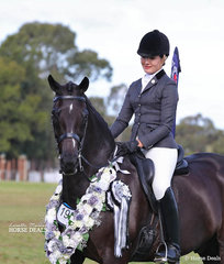 """Champion Large Show Hunter Hack of the Year """"Jermyn Street"""", owned & riddenn by Sophia Redenbach who was declared Champion Rider 17-21 years."""
