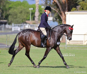 """The Morelli Family's """"Royalwood West End"""" was ridden by Joanne Prestwidge to win Champion Newcomer Small Hack."""
