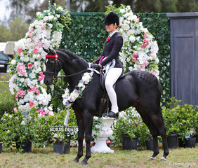 """Champion Newcomer Large Pony, Champion Preliminary Large Pony & Runner Up Open Large Pony """"Pickwick Park Mr Darcy, ridden by Courtney Cremasco for Sarah Rieger."""