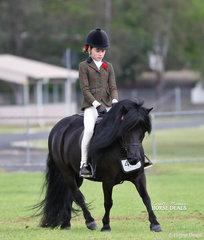 "Claudia Hughes riding Georgia Dalley's ""Otway View Fernando"" to win the Child's Ridden Shetland event."