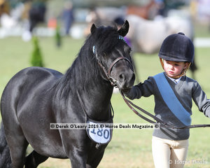 """Chloe Backman from Cannibal Creek Pony Club led """"Bojinda Little Kimiko"""" in the Pony Club Handler 5 years and Under 8 years"""