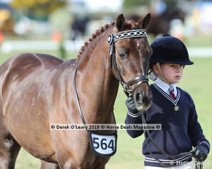 """Allanah Heagney from Leighsdale Pony Club led """"Springtime Park Opening Night"""" in the Pony Club Handler 5 years and Under 8 years, placing second."""