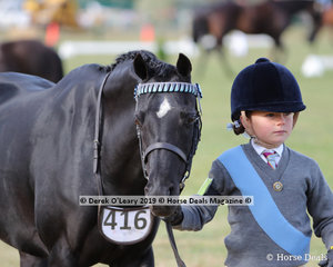 "Holly Backman from Cannibal Creek Pony Club was the winner in the Junior Pony Club Handler 5 years and Under 8 years, leading "" Malibu Park Pollini"""