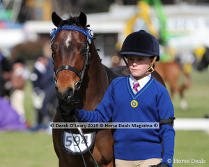 """Sienna Barnett competed in the Pony Club Handler 8 years and Under 10 years, with """"Torrensway Portrait"""" representing Corio & Moorabool Pony Club"""