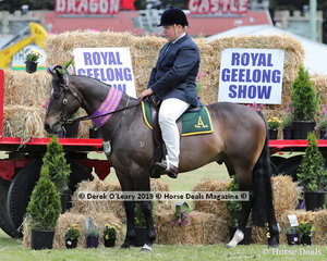 """Reserve Champion Working Australian Stockhorse, """"Todds Top Deck"""" exhibited by Suburban Lodge - Judy McPherson"""