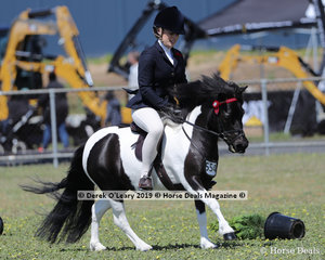 "Lee Purchase's exhibit in the Ridden Shetland Mare or Filly not over 10.2hh, ""Sleepy Hollow Breeze"""