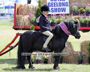 "Reserve Champion Ridden Shetland, ""Carreg Wen Salem"" exhibited by Amberley Thorpe"