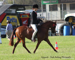 Champion District Pony Hack Bamborough Chanell ridden by Charlee Anthony  owned by Ciel Letts