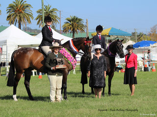 Winner of the Gary Robson memorial Champion of Champions was Worldly exhibted by Kirsty Harper Puurcell and runner up was ClemsonTuxedo  pictured with Isabell Cross Winston  Joanne Robson and judges Mieke Bigg and Gail Iskra
