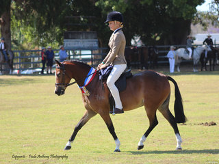 Champion Hunter Pony exhibited by Liz Davies