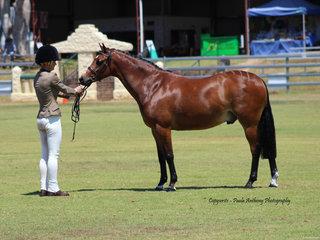 Champion Led Riding Pony Show Hunter exhibited by Liz Davies