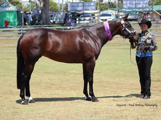 Supreme led Quarter horse