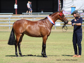 CHampion led Youngstock exhibit exhibted by Maryanne Bullpit