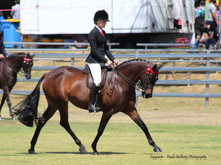 Tremayne True Moment winner of the Riding Pony under saddle