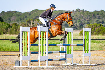 A beautiful bay Off The Track called  Sarmiento ridden in the 100cm class by Caitlin Butterworth at Boneo Park during the 2019 Total Animal Supplies Boneo Cup.