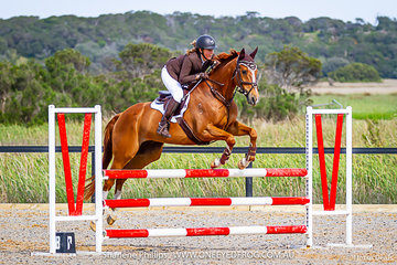 Sharon Ridgeway riding an Off The Track Gelding King Vassie in the 100cm class at Boneo Park in the 2019 Total Animal Supplies Boneo Cup