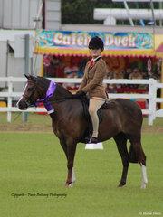 Champion Ridden Saddle Pony
