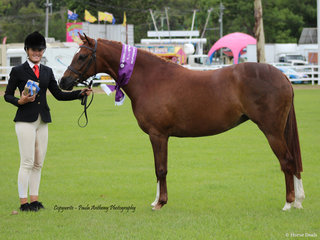 Supreme led Mare of the SHow Lee- Arnes Magestic Rose exhiited by Charlee Anthony for Janine Woodall