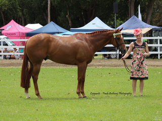 Supreme Led Thoroughbred exhibited By Tracey Stinson