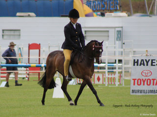 Kate Dolan and Tremayne Yours Truely working out for a win in the Pony ring