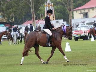 Champion Show Hunter Galloway Lee Arnes Magestic Rose ridden by Charlee Anthony