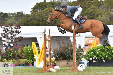 Clay Simmonds from Bourke in NSW has had some overseas experience recently and was putting it to good use in the 2019 Pride's EasiFeed Australian Senior Showjumping Championships. He is pictured aboard his, 'Oaks Costanza' by Vivant during round one.