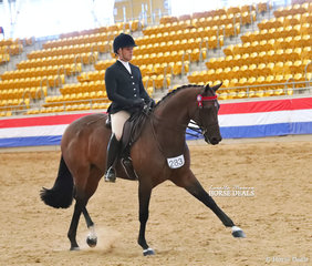 """The J&R EQUESTRIAN Champion Large Hack """"United"""", exhibited by Universal Stables, Adam Oliver & Phillip Bobic."""