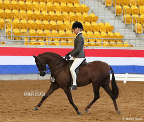 """Lee Traynor and """"Silkwood Top Notch"""" went Top 10 in The AUSTRALIAN HUNTER & SHOW HORSE ASSOCIATION Small Show Hunter Pony event."""