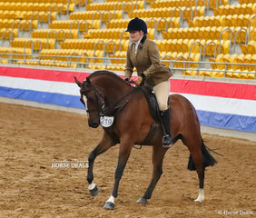 """The DUBBO & DISTRICT SHOW HORSE ASSOCIATION Champion Large Show Hunter Galloway """"Bellevale Hollywood Boulevard"""" ridden by Emma Rudder."""
