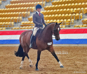 """The M.R. BREECHES Small Show Hunter Horse Champion """"Extatic GHP"""", exhibited by Universal Stables & Samantha Watt."""