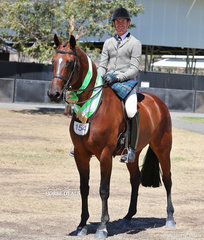 "Matthew Birch rode Courtney Larard's exhibit ""Dominique De Sandro"" to win Runner Up in The EMCEE APPAREL Show Hunter Horse over 16hh event."