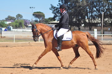 Marie Cooper riding Stockleigh Flaunt It in the Elementary 3A.