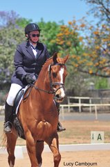 Burkes Awesome Style competing in the Novice 2B with rider Lynette Jarvis.