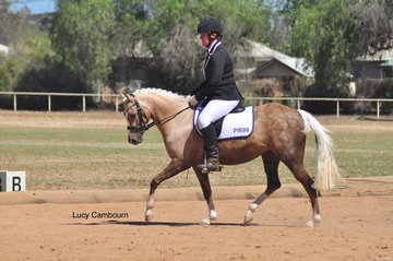 Marie Cooper had a busy day, also competing on Stockleigh Crem Dela Crem in the Preparatory E.