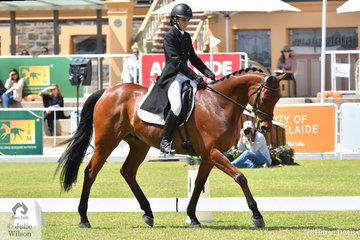 Amelia Schooley is pictured aboard her attractive Thoroughbred gelding, 'Grande Exito' by Success Express during the dressage phase of the Horseland CCI3-L.