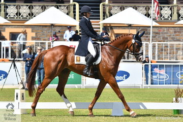 Vaz McLaughlan from WA was thrilled with her ninth place after the dressage phase of the Horseland CCI3-L. with 33.90 riding her Thoroughbred gelding, 'Kolora Stud Triple 8', another by Peintre Celebre.
