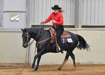 Diamond El Rio ridden by Kerry Rollins in the Senior Horse Ranch Riding