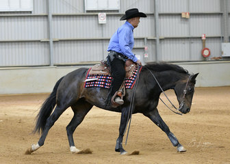 Select Amateur Reining was won by Kerry Cribb, riding Classic Genetics