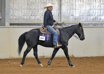 Stylish Herbert, ridden by John Hateley in the Senior Horse Ranch Riding