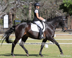 """Olivia Barba rode """"Thompson Park Joshua"""" in the Level 2B representing Shirley Heights Dressage Club"""