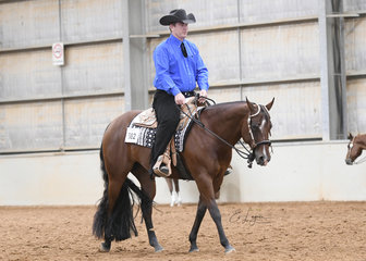 REQ Dont Doubt Me ridden by  Mark Webster in the Amateur Horsemanship class.