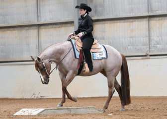 RRD Lets Talk ABout Me ridden by Holly Wilkie in the Junior Horse Trail.